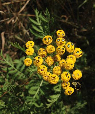 bloem 8