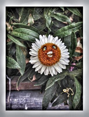 bloem 4