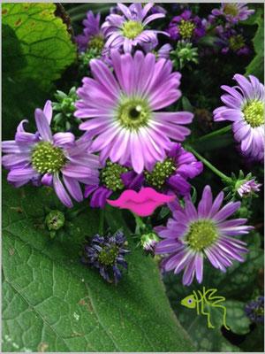 bloem 9
