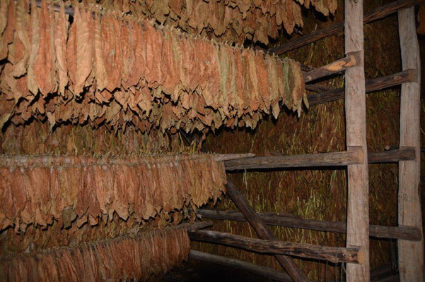 Tobacco production process