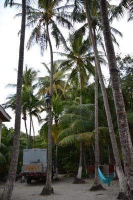 Erstmal müssen die Kokosnüsse runtergeholt werden damit nicht noch ein Solar Modul dran glauben muss
