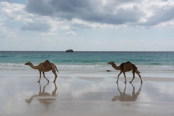 Strand von Fazayah