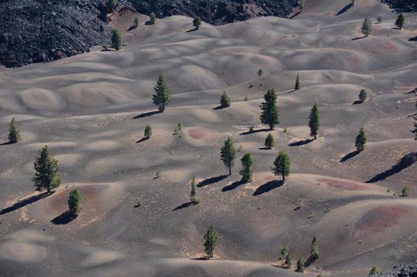 Blick vom Cinder Cone auf die Painted Dunes