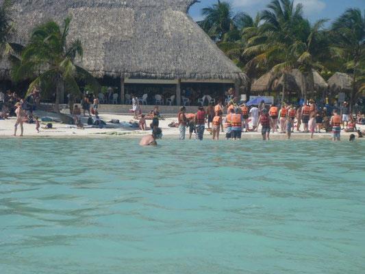 Alle wollen schnorcheln mit Schildkröten am Strand von Akumal