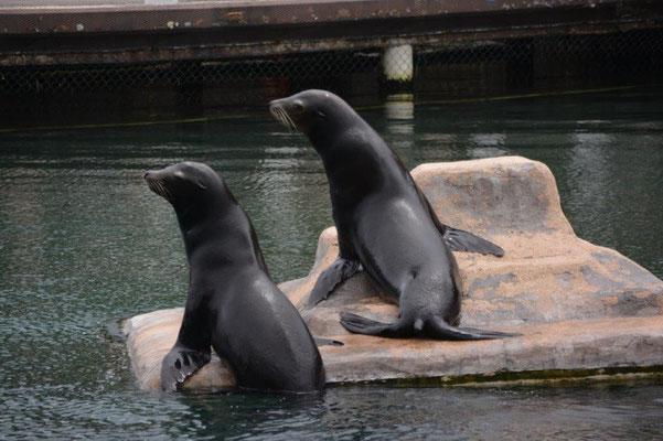 Park Aventura - Seelöwen