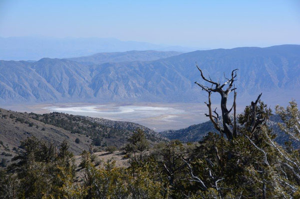 Ancient Bristlecone Pine Forest, im Hintergrund Death Valley