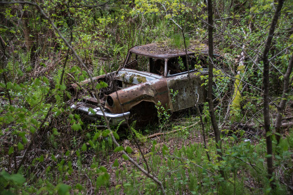 crashed in the woods