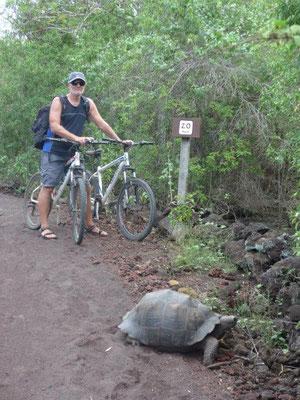 Wilde Riesenschildkröte