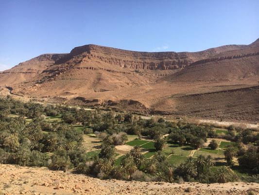 Palmenoase in der Steinwüste