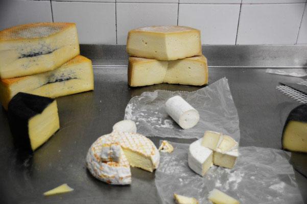 Besichtigung der Käserei