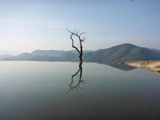 Hierva del Agua