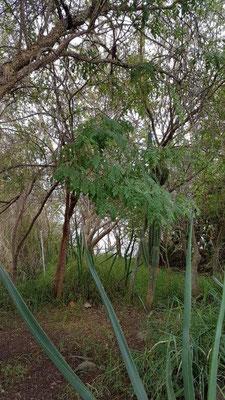 Biosphere 2 - rain forest