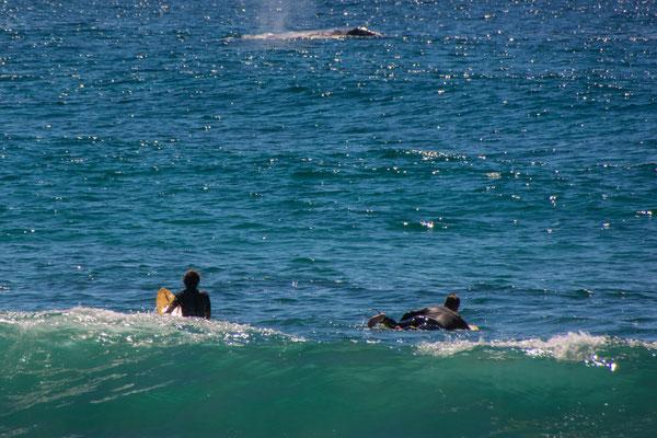 Wale ganz nah am Ufer