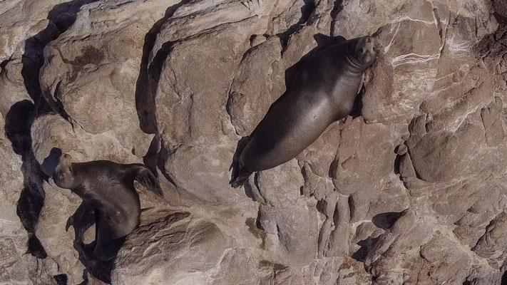 Seelöwen Felsen