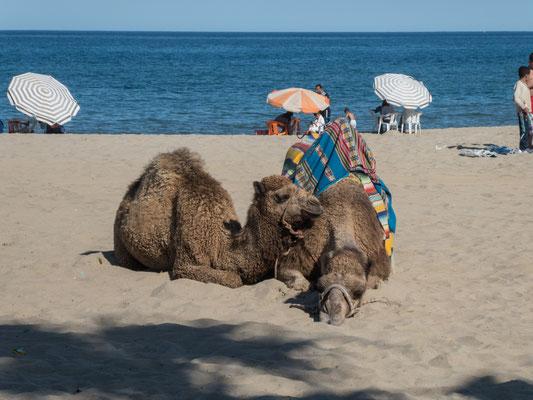 Warten auf Kundschaft am Strand von Martil
