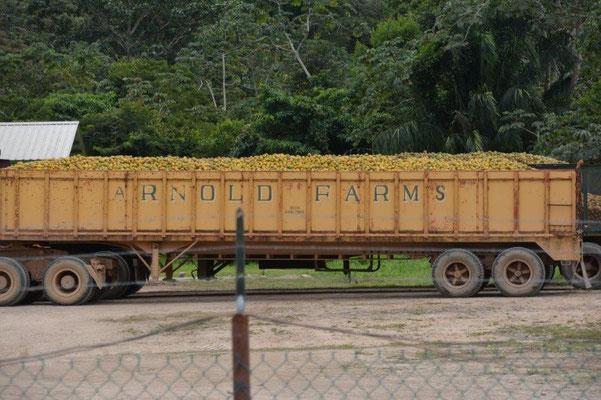 Orangentransport