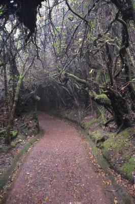 Waldspaziergang bis sich der Nebel lichtet.