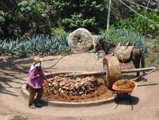 Traditionelle Mezcal Mühle auf dem Land mit Esel