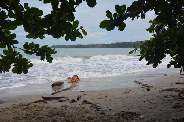 In NP Cahuita