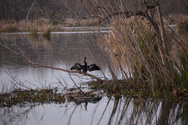 Brazos Bend State Park