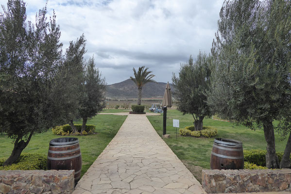 vinery in the valley of Guadalupe
