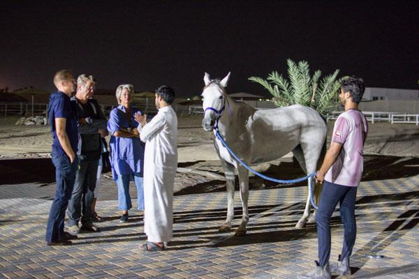 Unser Freund Hamid mit einem seiner Endurance Pferde