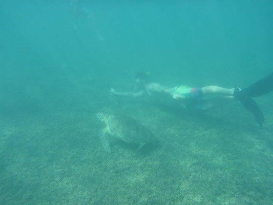 Schnorcheln mit Schildkröten am Strand von Akumal