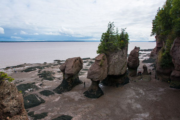 Hopewell Rocks, Fundy Bay, 12m Tidenhub