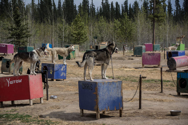 Husky Ranch