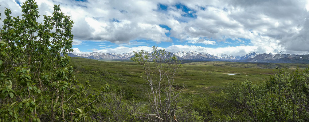 im Denali National Park