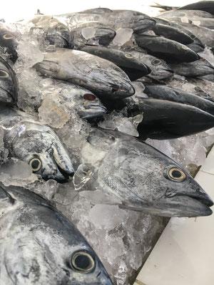 Fish Market in Mirbat