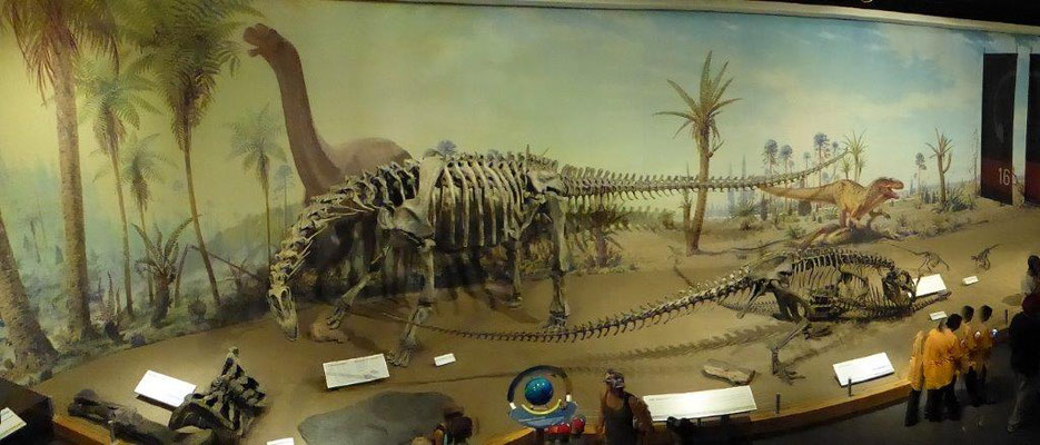 Dino Museum