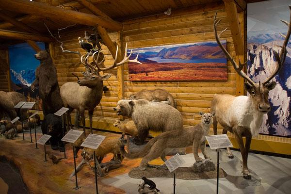 Whitehorse, MacBride Museum