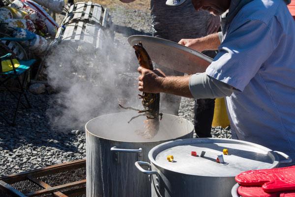 Der Lobster wird heiß gebadet