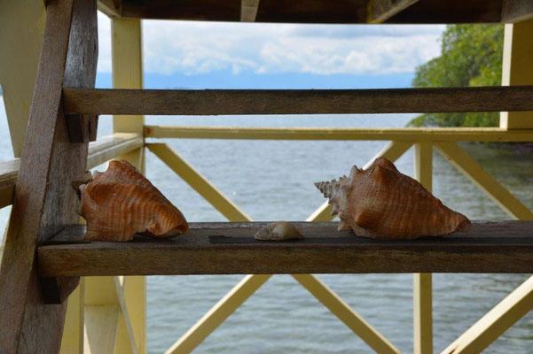 Gesehen auf Bocas del Toro