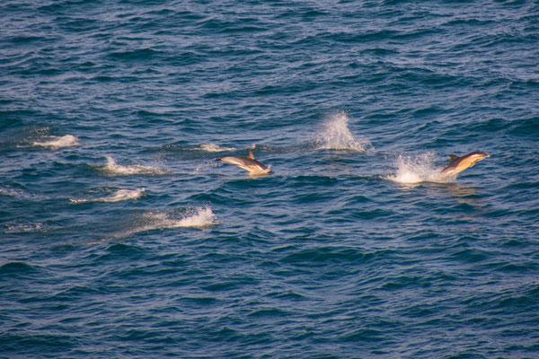 Delfine begleiten uns