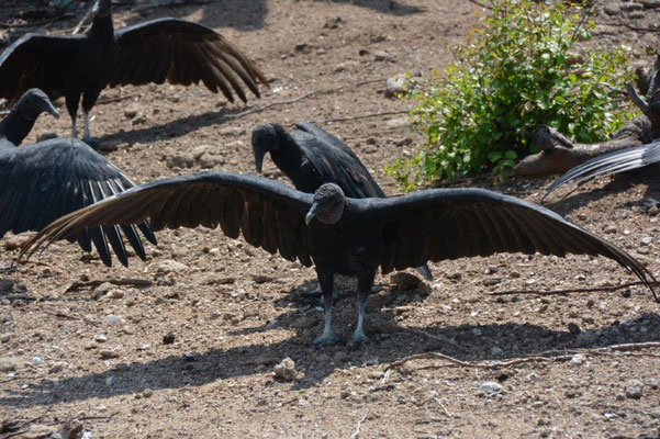 The vultures are waiting