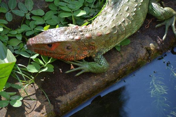 Im Reptilienpark