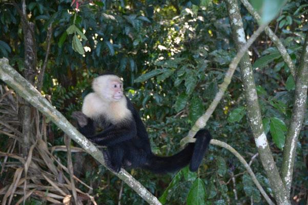 im Manuel Antonio Nationalpark