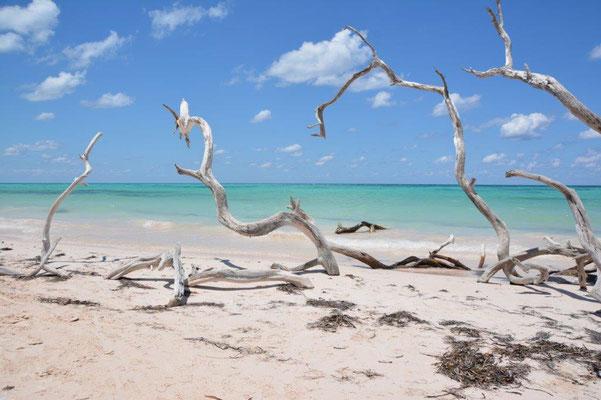 Am Strand von Jutias
