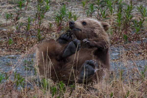 nein, das ist kein Panda Bär