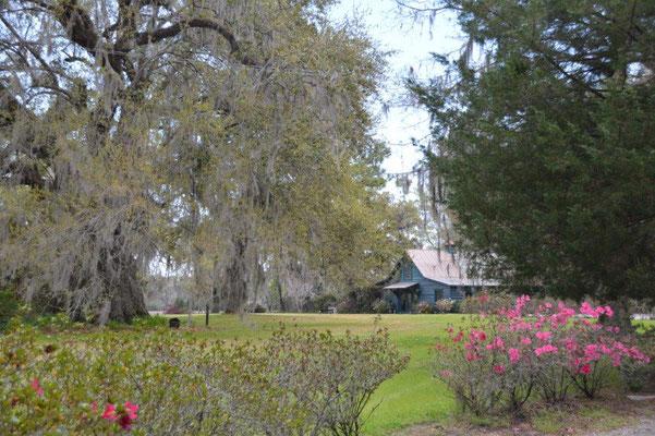 Magnolia Plantage