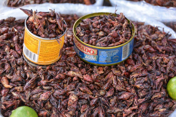 Speciality grasshoppers
