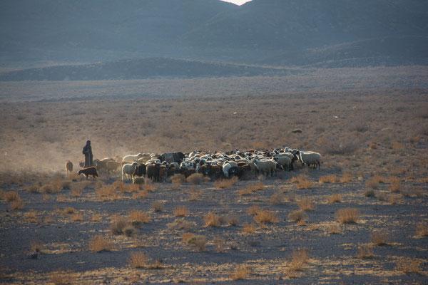 Schafhirte bei der alten Karawanserei