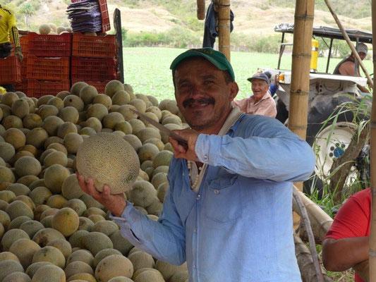 Honigmelonen frisch vom Erzeuger