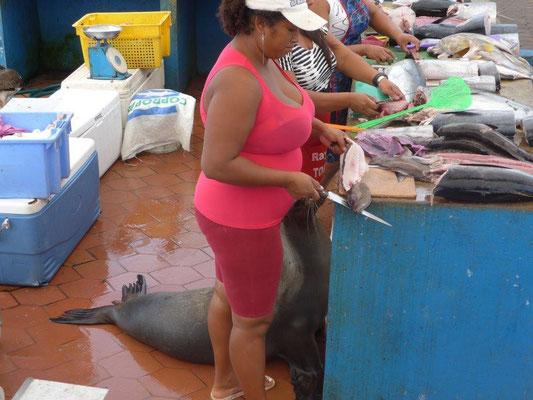 Seelöwe wartet auf Abfälle