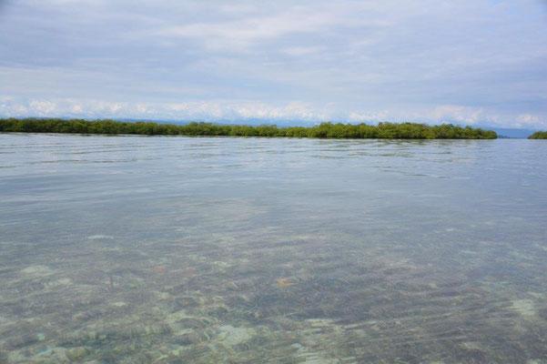 Glasklares Wasser mit Seesternen