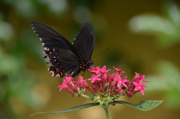 Butterfly farm