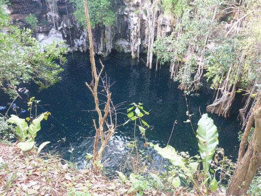 Und diese Cenote hatten wir dann fast alleine