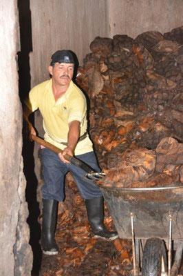 Besichtigung der Tequila Fabrik in Atotonilco - harte Arbeit